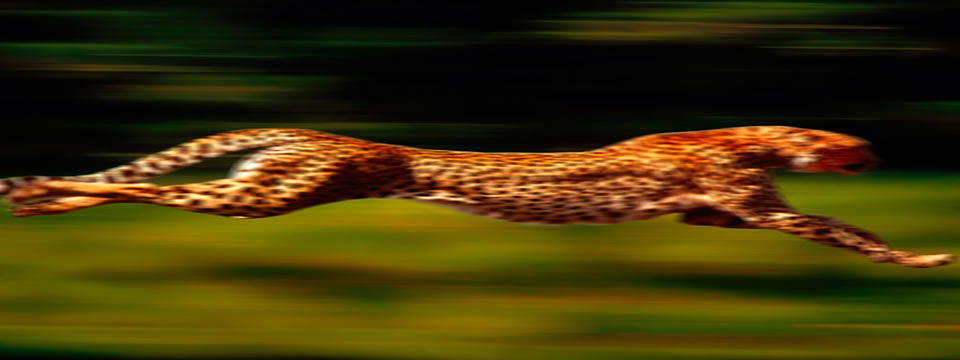 https://www.creativadwords.com.au/wp-content/uploads/2013/04/Cheetah-performance-960-by-360.jpg